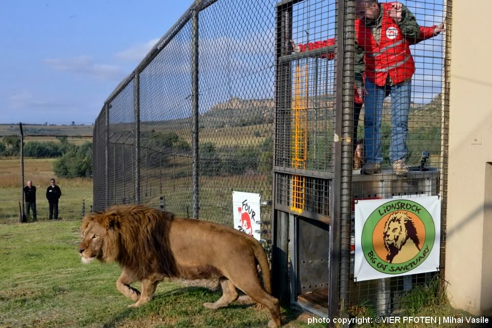 Lionsrock Big Cat Sanctuary