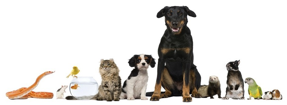 We safely transport your pets as well as all kind of exotic animals.